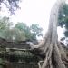 Ta Phrom 母廟